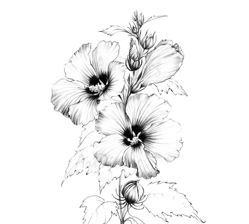 Hibiscus Printable Sketch Line Drawing Art Large Botanical Etsy