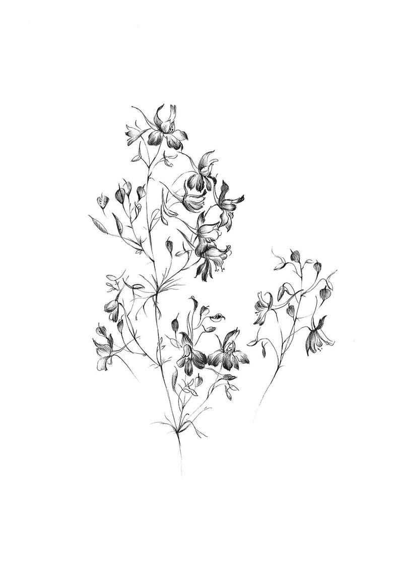 Larkspur Art Sketch Wild Flower Artwork Graphics Etsy