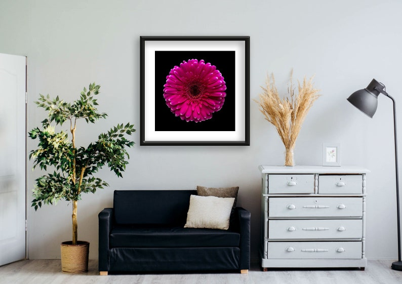 Office Big Photo Home Vertical Wall Art Minimal Photography Decor 2019 Pink gerbera black background Fine Art Gicl\u00e9e Print