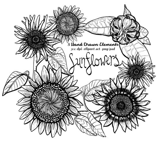 Sunflower Clipart Instant Download Pen Ink Lithographic Etsy