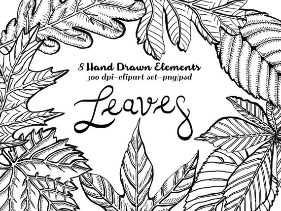 Fall Leaves Clipart Instant Download Lithographic etched drawing