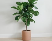 Matte Salted Caramel | large planter | cylinder | indoor and outdoor planter | hand painted | minimalist | plant pot