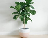 Matte Blush Planter | Pot | Indoor & Outdoor Modern Lightweight Hand Painted Planters | Large Planter | Minimalist Shape | Plant Pot