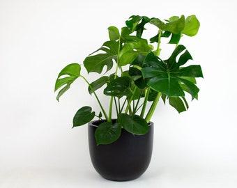 Matte Black Round Planter Pot   Indoor & Outdoor Modern Lightweight Hand Painted Planters