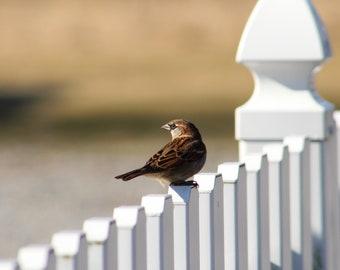 Chipping sparrow. Bird photo. Nature photography. Ohio birds.