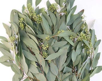 Fresh Seeded Eucalyptus Bunches - Bulk Greenery  (Free Expedited Shipping)
