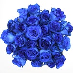 Fresh Blue Tinted Bulk Roses  (Free Shipping)