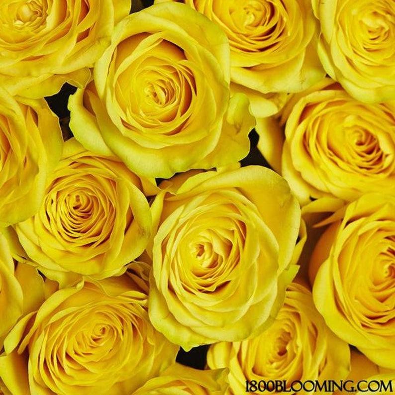 Fresh Yellow Bulk Roses  Free Shipping image 0
