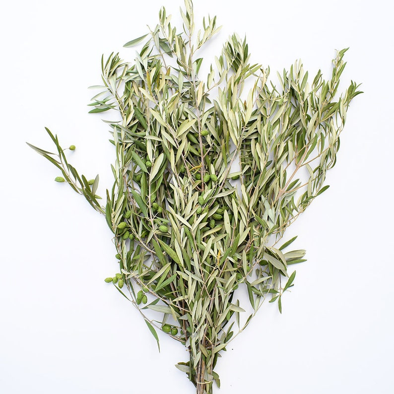 Fresh Olive Branches  Wedding Events Bridal Confetti Toss image 0