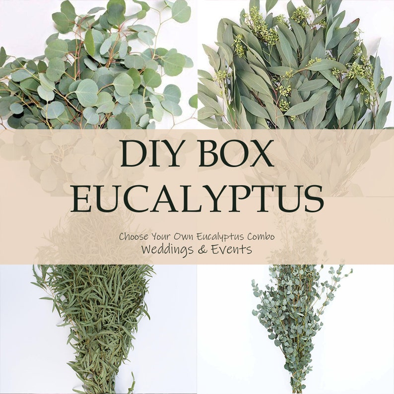 DIY Wedding  Fresh Eucalyptus for Weddings & Events  Silver image 0