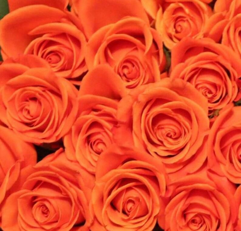 Fresh Orange Bulk Roses  Free Shipping image 0