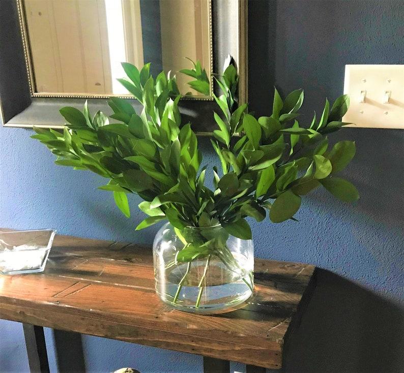 Fresh Israeli Ruscus Bunches  Greenery Bouquet  Weddings image 0
