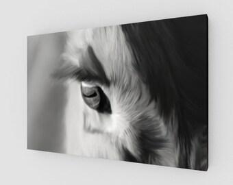 Black & White Angus Eye Canvas