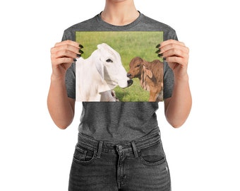 Grey Brahman Cow with Red Brahman Calf Photo paper poster