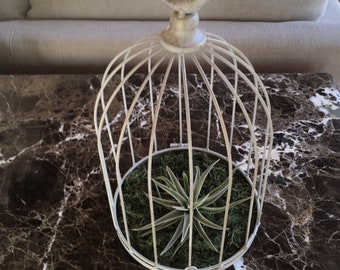 Gray Wire Cloche w Bird, Air Plant, Wedding Decoration, Bridal Shower Gift, Mother's Day Gift, Birdcage, Victorian Romance, Southern Living