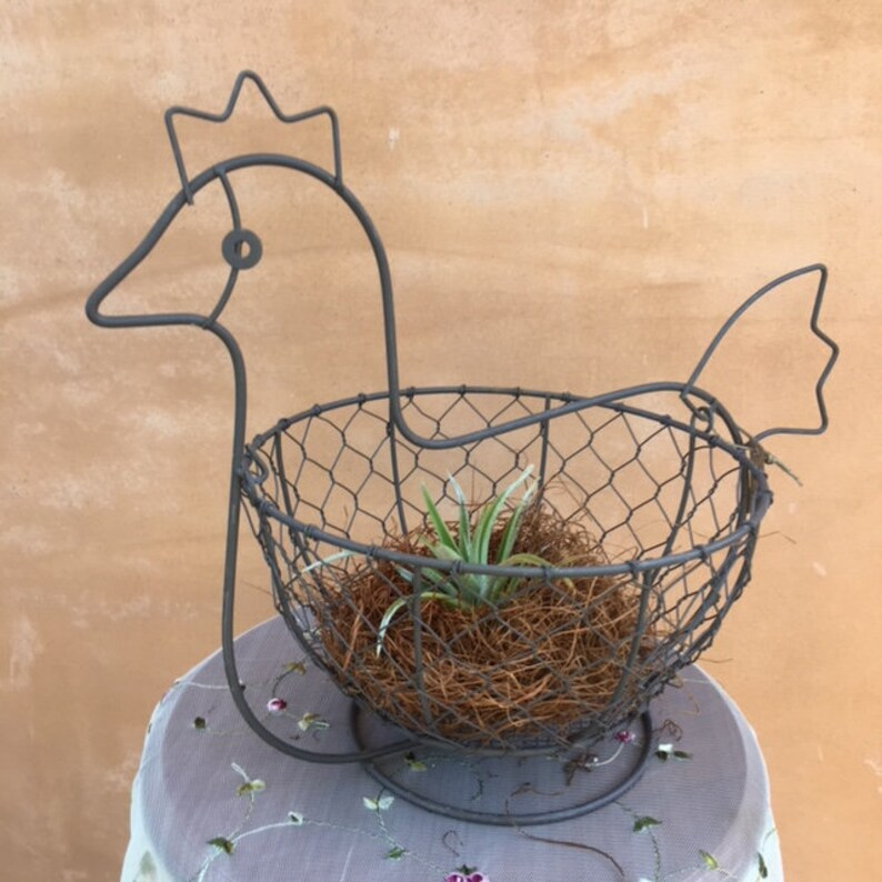 Rustic Wire Chicken w Air Plant Rustic Style Country Living Farmhouse Decor Southern Charm Chicken Basket and Stand Farm Animal Decor