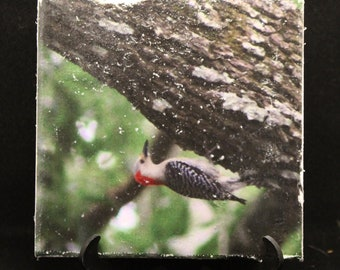 Decorative Tile with Red Headed Woodpecker