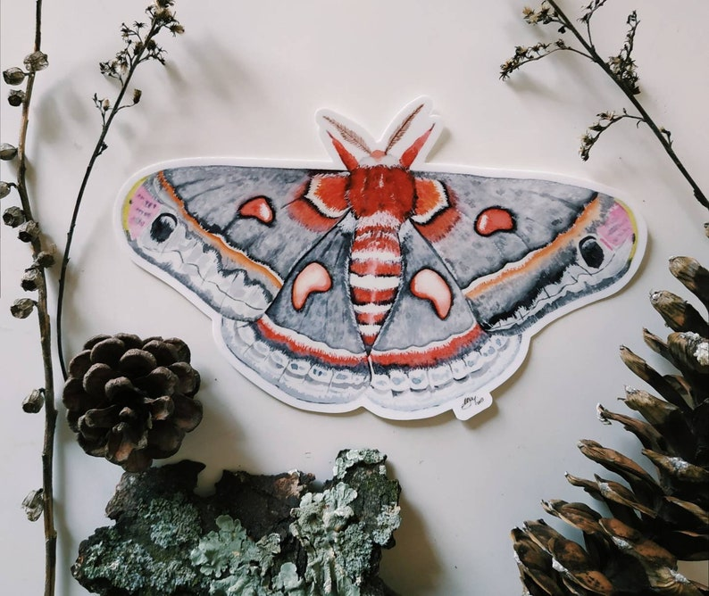 Bumper sticker | Moth sticker | Scratch resistant sticker | Waterproof  Sticker | Die-cut Vinyl beetle sticker | Large stickers | Big sticker