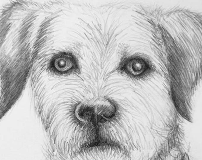 Dog Portrait, Dog Drawing of your pet, Dogs, Pooch, Hound, Pet Portrait, Great for remembering your fur baby, dog, pet friend. Great gift.