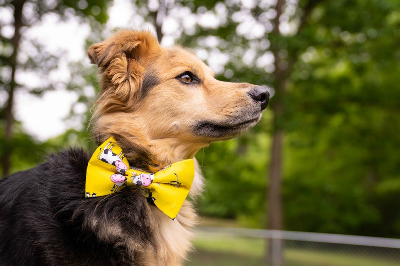 Cow Print Dog Bow Tie Cow Dog Bow Tie Cow Cat Bow Tie Cow Print Cute Cow Dog Print Dog Bow Tie Cow Bow Tie Cow Pattern Dog Bow Tie