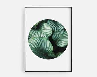 Abstract Green Leaf Circle Exotic Green Plant Tropical Gallery Wall Art Giclée Poster Print Minimal Kitchen Living Bedroom Home Decor Pictur