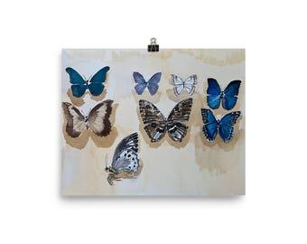 Set-up Butterflies