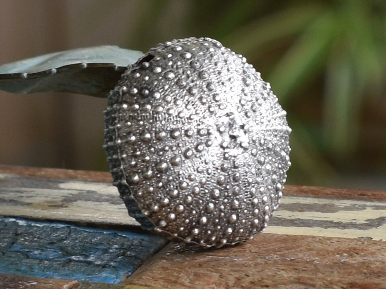 Metal Casting 37mm-Large Sea Urchin Pendant-Antique Silver- Quality Jewelry  Making Supplies