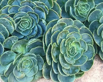 The Proper Succulent