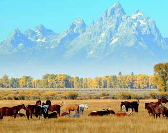 In the shadows of the Tetons