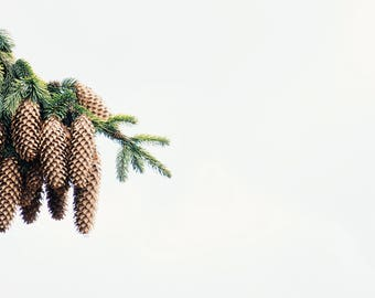Spruce Pine Cones Branch Art Print Wall Decor Image Detail Colors - Unframed Poster