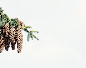 Spruce Pine Cones Branch Art Print Wall Decor Image Self-Adhesive - Wallpaper Sticker