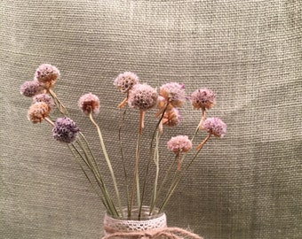 Dried pods etsy 15 dried armeria pods with 10 12 stems sea pinks thrift flowers mightylinksfo Gallery