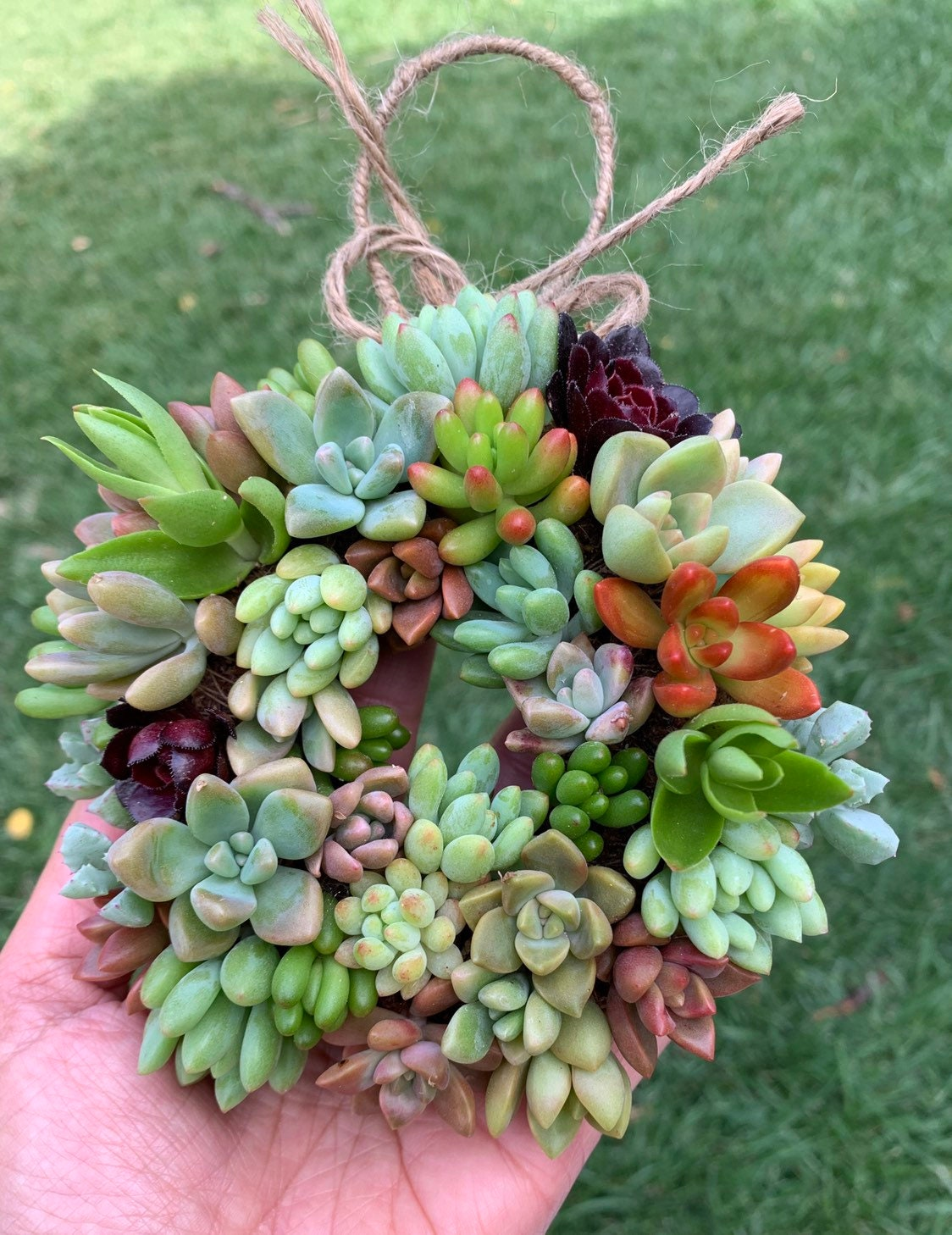 4 5 D Mini Living Succulent Wreath Birthday Gift Etsy