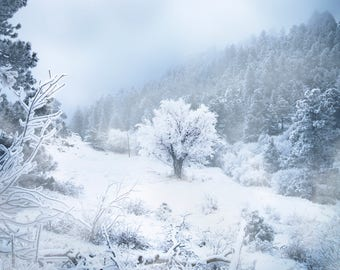 Cold Winter, Landscape Prints, Photography, Snowy, Mountains, Forest, Colorado, West