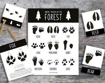 Forest Animal Tracks | Homeschool Printable | Nature Study