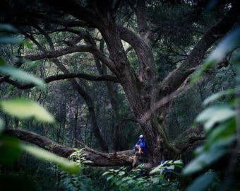woods photography, landscape photography, signed photo, print, trees photo, fine art photography, original photography
