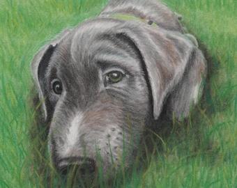 Silver Labrador Retriever, Labrador Retriever, Puppy Dog Prints, Dog Prints