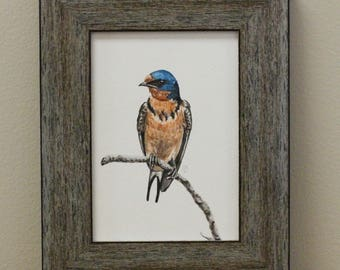 Watercolor Bird Art Print - Barn Swallow