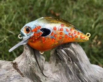 Custom Painted FRED A STARE Shallow Diver Crankbait