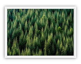 Forest Print * Forest Wall Art Woodland Trees Nature Print Modern Home Decor Landscape Print Green Tree Art Tree Print Forest Wall Art Misty