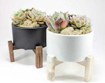 BUNDLE SAVE Succulent Arrangement Desk Decor Birthday Gift Home Office Housewarming Black White Ceramic With Stand