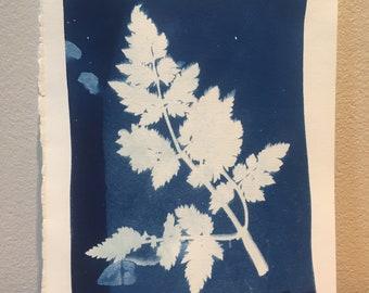 Handmade Cyanotype Nature Print: London Series