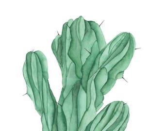Cactus | 2
