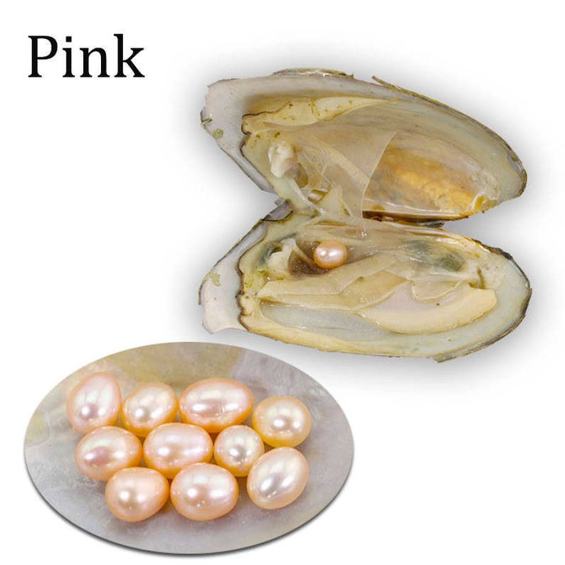 Natural 5pcs DIY Individually Wrapped Oysters with Large Pearls Gift 7-8MM