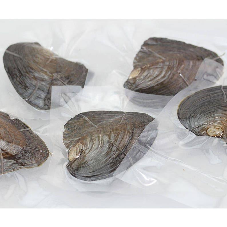 50 pcs Twins Pearl 6-8mm AAAA round Freshwater oysters with pearls,oyster twins pearl round pearl beads MX001