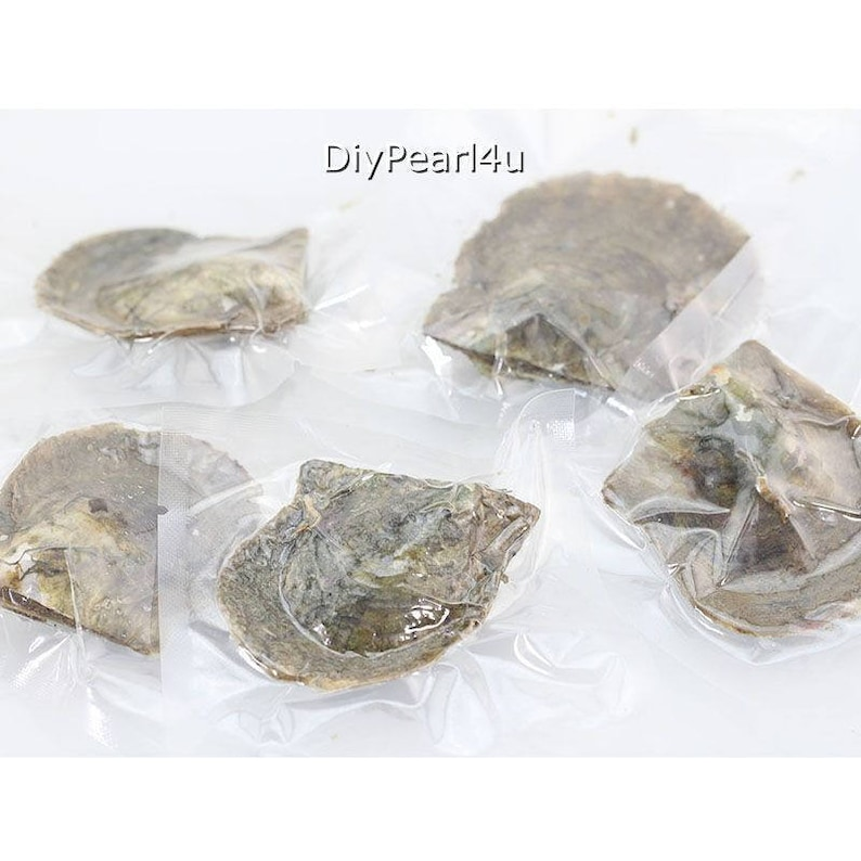 Akoya Oyster with pearl,6-7mm Round AAAA Pearl in Oyster,Saltwater Pearl Oyster Akoya Pearl Oyster Color 5#