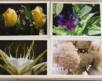 Flower Note Cards-Blank Photo Greeting Cards-Nature Photograph Cards-Macro Photos-Spring Flower Note Cards-Botanical Garden note card set