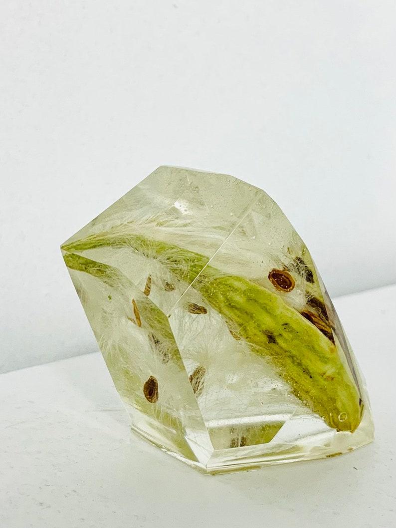 MilkWeed Pod and Seeds Preserved in Resin Geo Gemstone Crystal Art Decor.