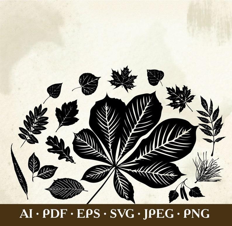 Types of leaf pdf