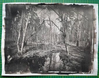 """Briesetal, 11x14"""" Saltprint, Fineart Photography, Wetplate, Landscape, Wood, 30x40cm, unique, historic, analog"""